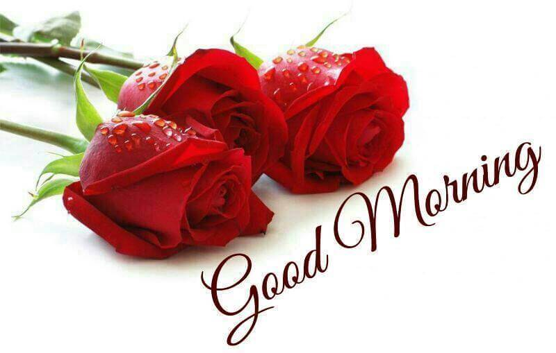 Top 100 good morning messages sms for love good morning night good morning love message m4hsunfo