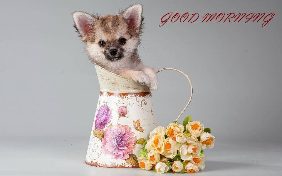 Smallest Puppy With Flower