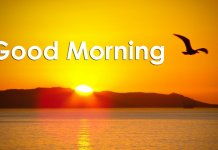 Good Morning Wednesday Images Wallpapers